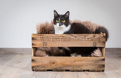 Katzenfotografie3