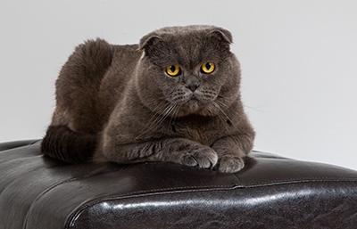 Katzenfotografie2