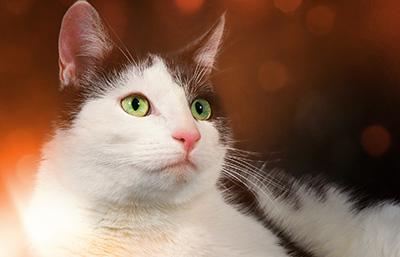 Katzenfotografie4